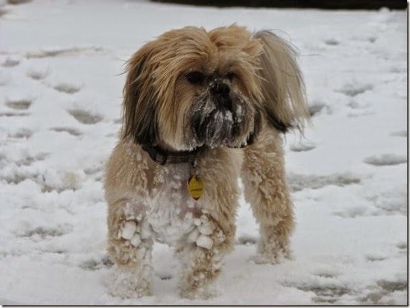 Frozen Bailey