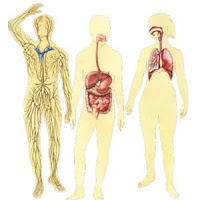corpos.jpg