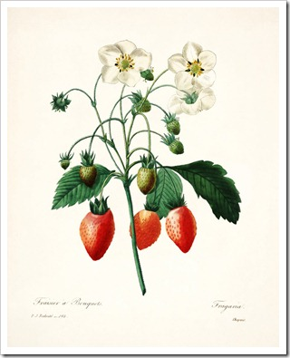 redoute_strawberries