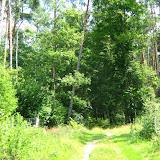 Las w Gołuchowie