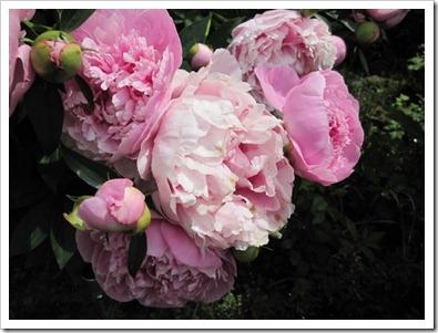20120608_flowers_007