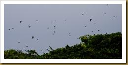 b Tree Swallow SwarmD7K_2529 August 06, 2011 NIKON D7000