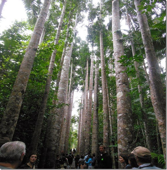 Avenue of trees Paranella