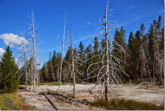 08-08-14 B Yellowstone NP (210)