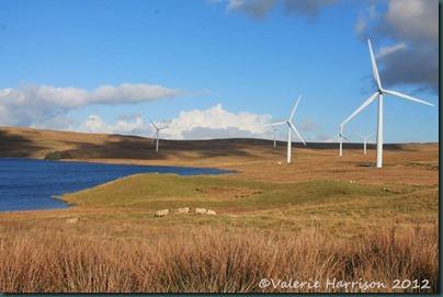5-windfarm