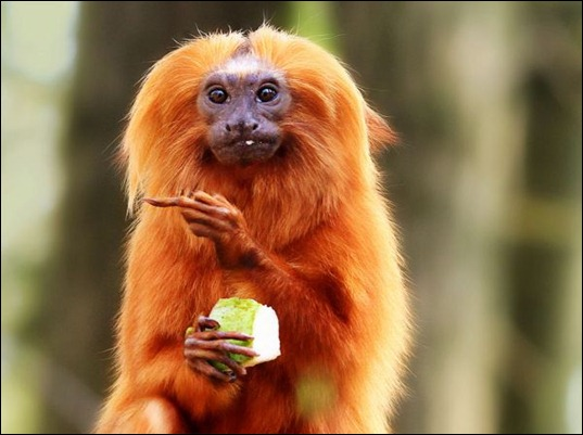The-thumbnail-invisible-gesture-middle-finger-monkey-eat-eating