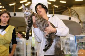 Международная выставка кошек  WCF 12-13 сентября г. Санкт-Петербург