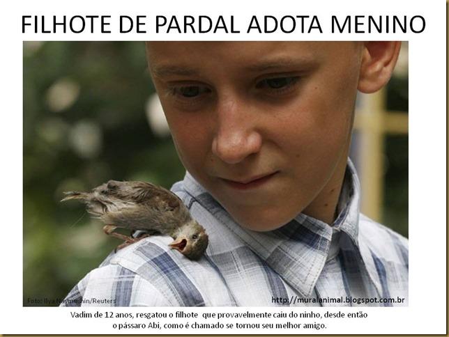 FILHOTE DE PARDAL ADOTA MENINO