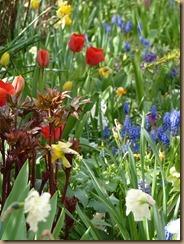 garden colours 002