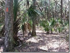 Florida Trail - Orange blazes