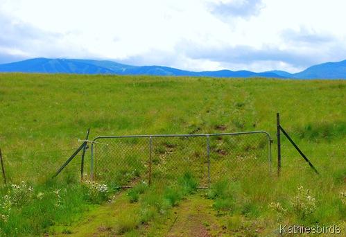 DSC_0028-AZwhite mountains-kab