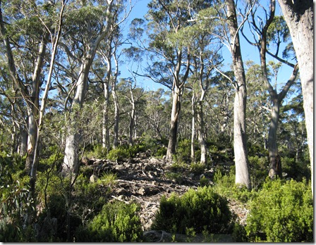 Forest and shrubs on western ridge