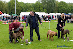 20100513-Bullmastiff-Clubmatch_30994.jpg