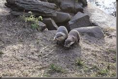 16_12_2014-12_40_50-6150Edinburgh Zoo