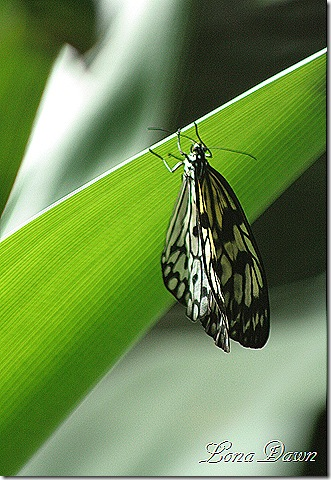 FPC_Buterfly_Unknown