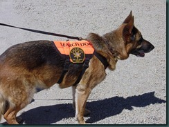 K-9 Dog Search and Rescue Team 010