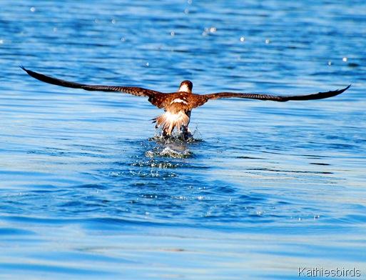 6. wings span-kab