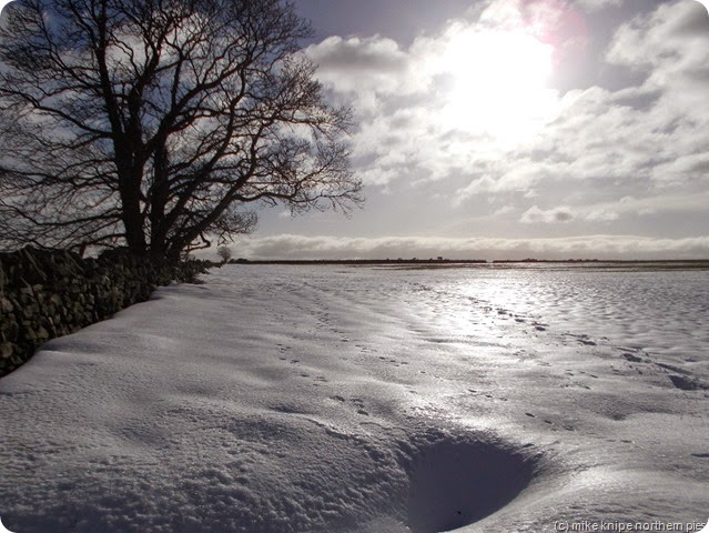 shiny snow - now covered in cowmuck