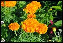 01b-flowers