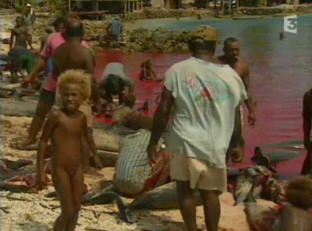 Dolphin slaughter in the Solomon Islands, 2009. fgregrereh / YouTube