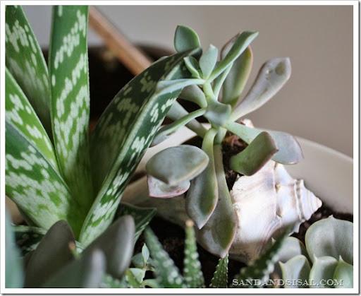 Plantación de plantas suculentas en tarros | POPSUGAR Inicio