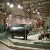 Washington DC - National Museum of Natural History
