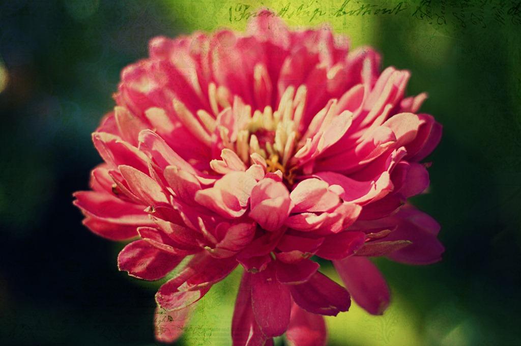 [Flower%2520texture%255B5%255D.jpg]