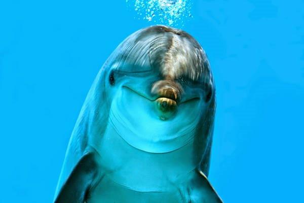 6- Golfinhos