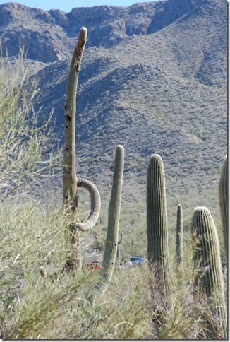 01-02-12 Saguaro National Park - West 076