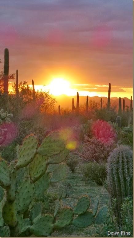 Saguaro NP West_118