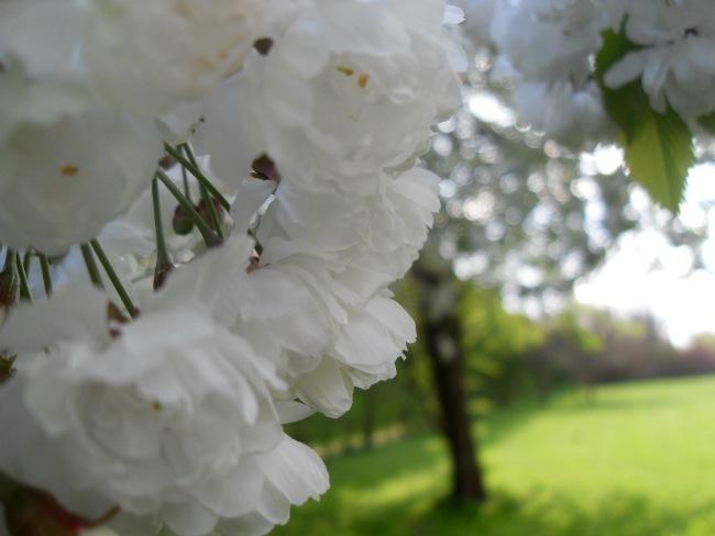 hvid1