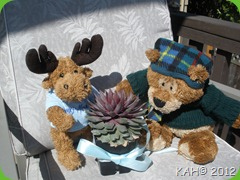 Moosey-Moose Gives Sleepy Bear a Cactus