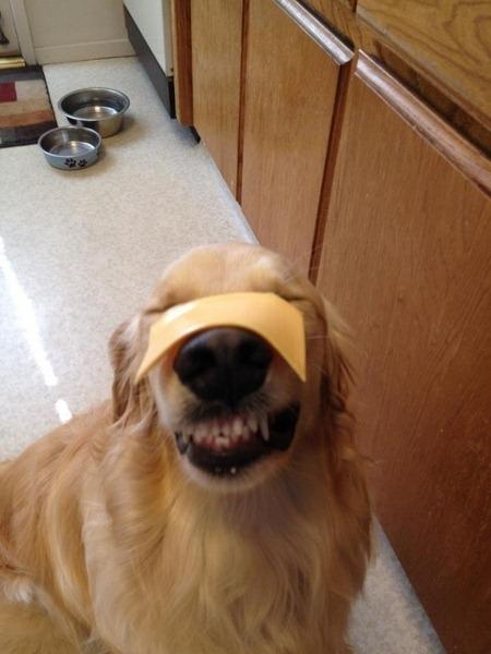 perros divertidos (4)