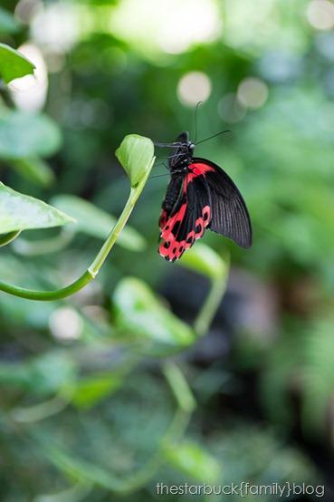 Callaway Gardens butterfly garden blog-13