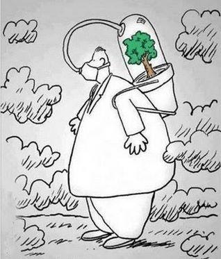 Arborização é