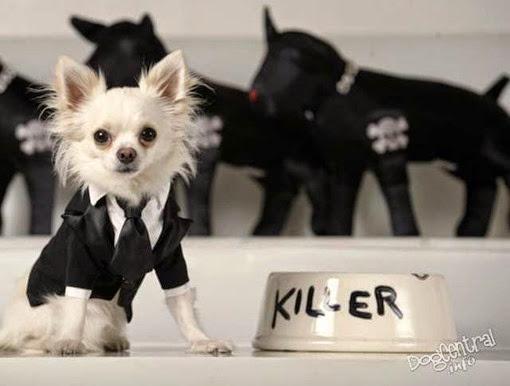 Мелкая собака в пиджаке