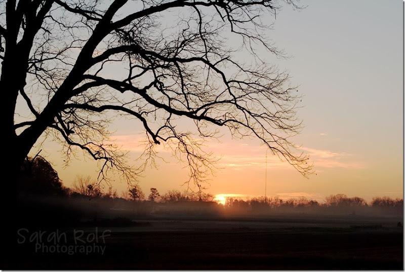 fog-at-dawn