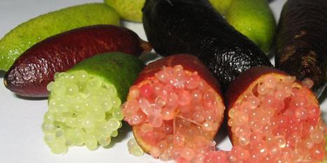 Lima caviar
