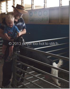 Daniel pats a goat