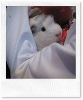 Pet Service 2011 - Guinea Pig Friend