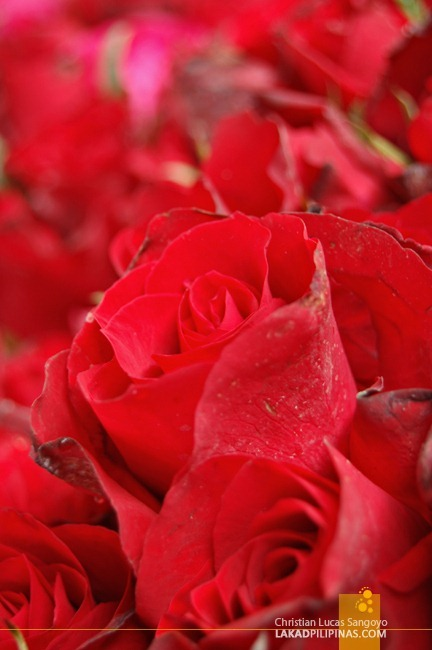 Red Red Roses at Dangwa Flower Market in Manila