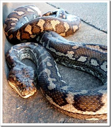 SnakeP1030463