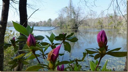 Magnolia Plantation_410