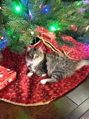 Benny Z under the Christmas tree
