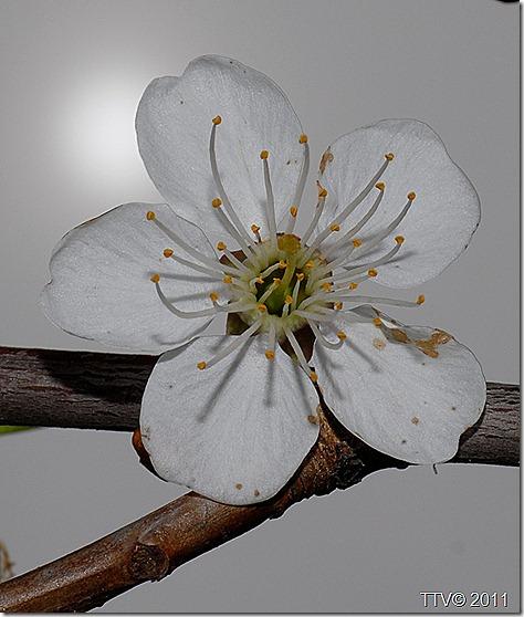 kukkia 037