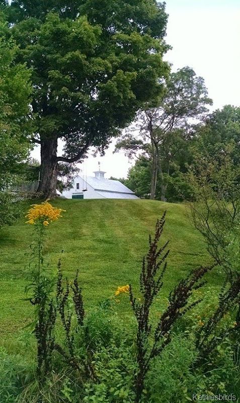 3. barn and lawn 9-6-14