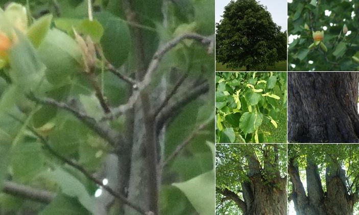 View treesmay2011