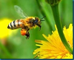 simplicity bee