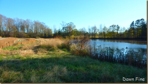 bonnies pond and soy field_004