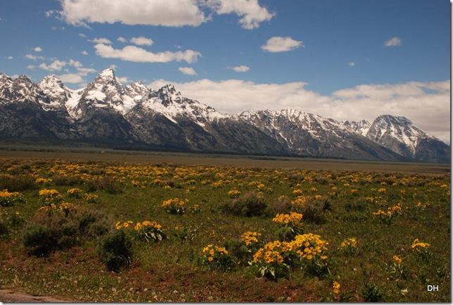 06-04-13 E Tetons Antelope Flats Area (4)